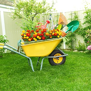 wheelbarrow full of gardening tools on a green lawn