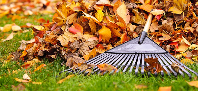 fall supplies leaves with rake