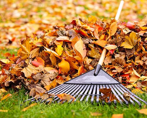 fall supplies - leaves with rake