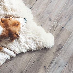 laminate flooring under a sheepskin rug and a sleeping dog